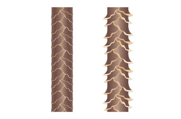キューティクルと枝毛