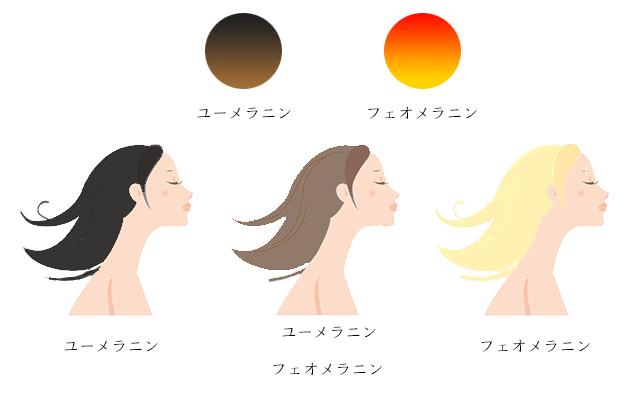 メラニンと髪色,黒,金,ブロンド,茶髪