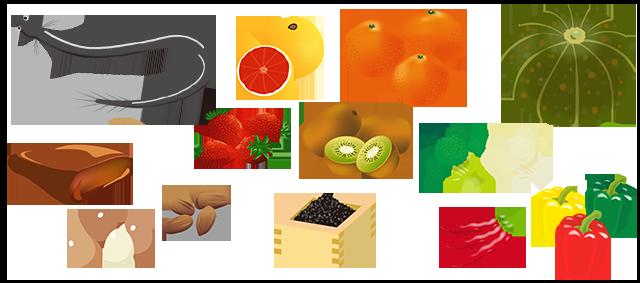 ビタミンが多い食べ物, 柑橘系,鰻,ごま,かぼちゃ,アーモンド,レバー